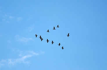 Many birds flying up in the cloud sky