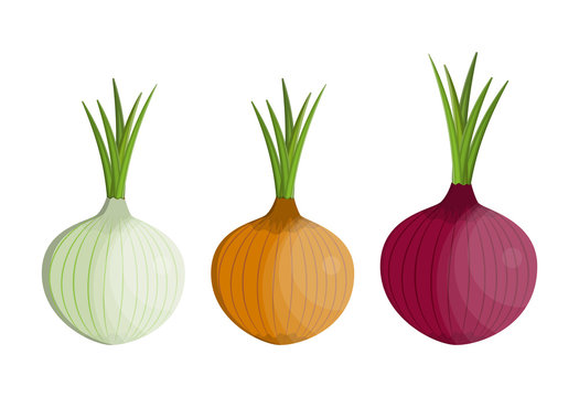 set Fresh Vegetable Onion isolated icon