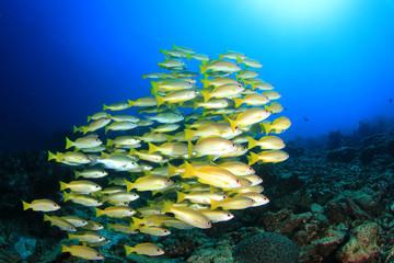 Tropical fish on coral reef underwater in ocean