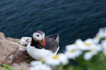 one puffin on cliff