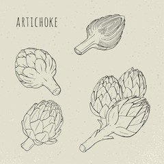 Artichoke set hand drawn botanical isolated and cutaway plant. Sketch vector illustration
