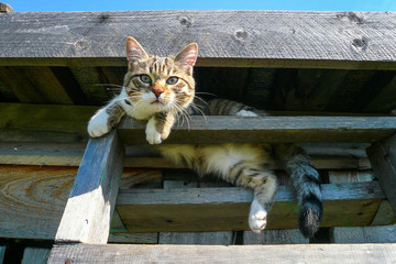 Tabby cat climbed the stairs to the street and lies underneath the roof.