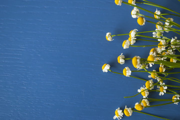Camomile wild row on a blue wooden background
