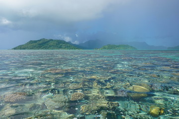 French Polynesia sunny weather on the lagoon with corals below water surface and rain on Huahine island in background , south Pacific ocean