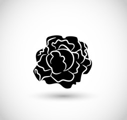 Lettuce icon vector