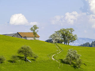 Farm on a hill, dandelion pasture, pear tree in blossom, Austria
