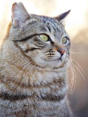 凛々しい猫の表情