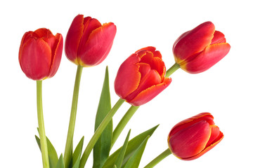 Bouquet of red tulips.