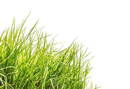 touffe d'herbe en coin de page, fond blanc