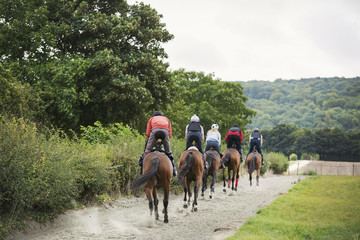 Rear view of a group of riders on brown horses riding along a path.