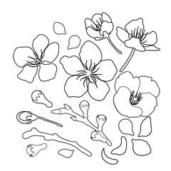 Graphic sakura set