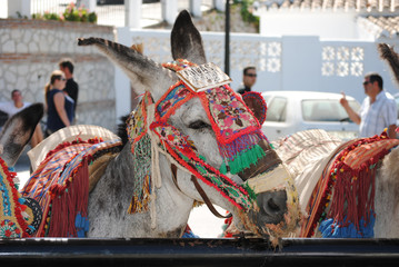 Donkey in Mijas. Andalusia, Spain.