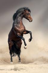 Wall Mural - Bay horse rearing up in desert dust