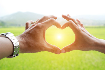 hands in the form of heart against the green rice. Hands in shape of love heart