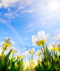 Wall Mural - art Spring tulip flower on blue sky background; Happy Easter Day