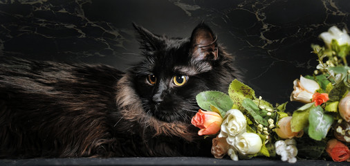 Black fluffy cat with roses on a dark background