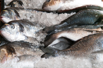 Fresh fish for sale at the local town market stall