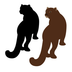 cougar vector illustration style Flat set silhouette black