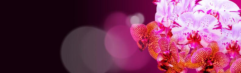 Bukiet orchidei
