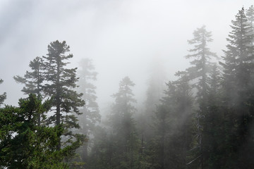Misty view from Larch Mount, fog cover the forest. USA Pacific Northwest, Oregon.