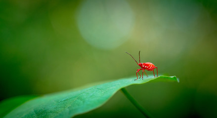 Red bug macro Wall mural
