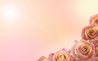 Fresh soft color background with rose flowers. Wedding background.