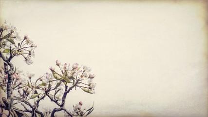 tree blossom illustration