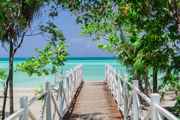 natural gorgeous amazing view of wooden bridge leading to the beach through tropical garden 壁紙(ウォールミューラル)