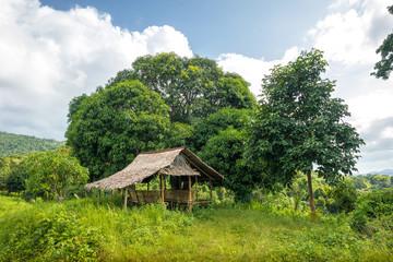 Nipa Hut and Mango Tree