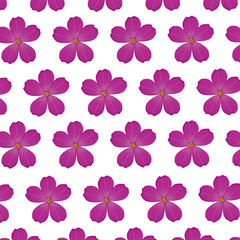 plumeria flower purple wallpaper decoration vector illustration