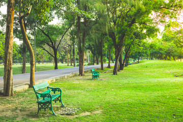 green bench at the park  in afternoon