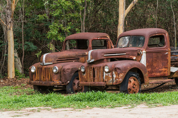 Two rusty old Ford trucks abandoned