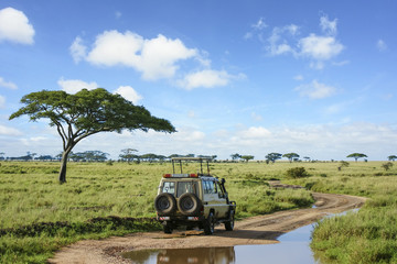 Safari landscape in Serengeti grassland