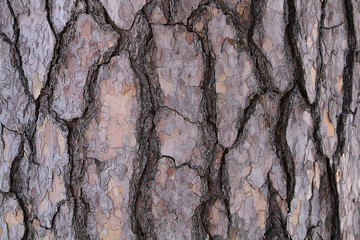 The texture of the bark of a pine tree.
