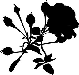 roses silhouette with seven buds on white background