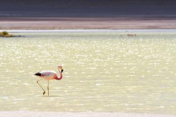 Flamingo im Bolivianischen Altiplano