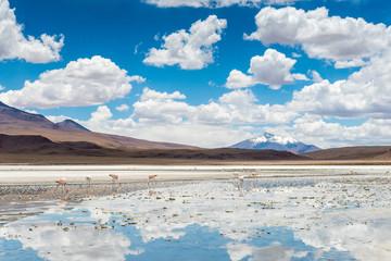 Landschaft mit Flamingos im Bolivianischen Altiplano