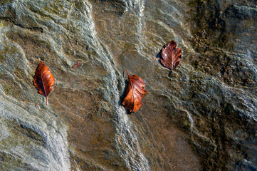 Welke Blätter auf nassem Stein