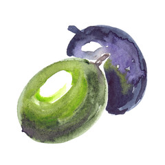One black olive and one green olive painted in watercolor on clean white background