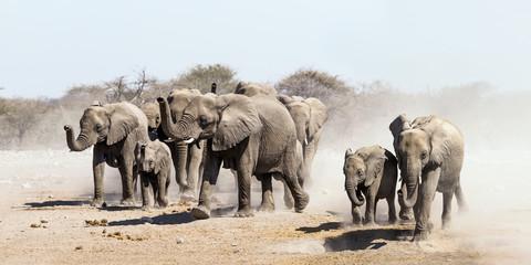 Elephant herd on the run in Etosha national park savannah, Namibia.