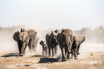 A herd of elephants approaches a waterhole in Etosha national park. Northrtn Namibia, Africa. Wall mural