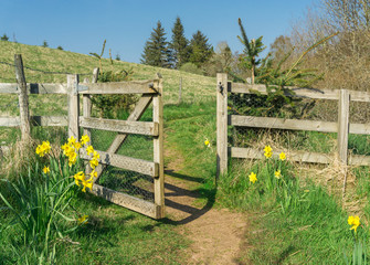 Hiking trail through gate and flowers. Road to success. Springtime.