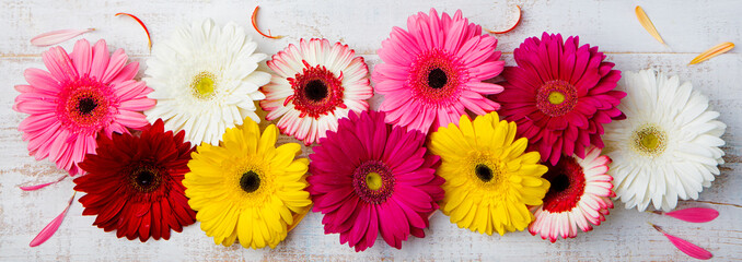 Colorful gerbera flowers on white wooden background. Top view. Copy space