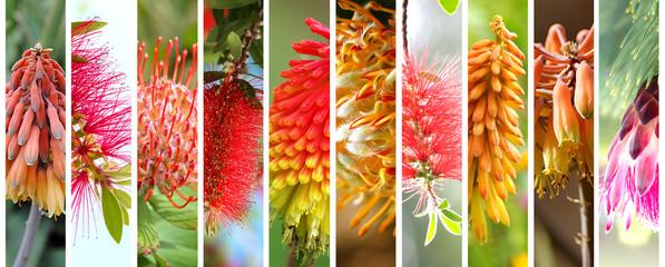 Acrylic Prints Plant Native Australian plants set