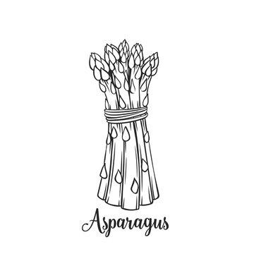 Hand drawn asparagus icon.