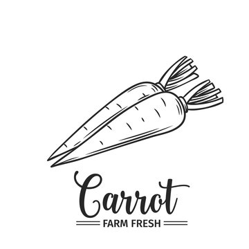 Hand drawn carrot icon.