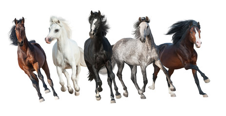 Horse herd run forward isolated on white background