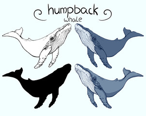 humpback whale in 4 version: outline, silhouette, colour