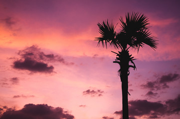 silhuette of palm tree at sunset