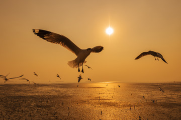 Seagull with sunset on the sea at Bangpu, Thailand